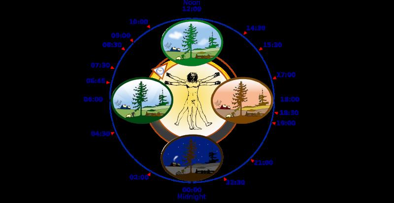 Circadian Rhythm Sleep Disorder Biological_clock_human