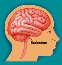 Central Sleep Apnea - Brainstem