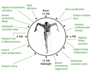 Circadian rhythm or body clock