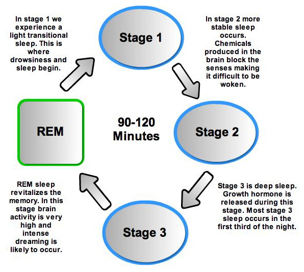 an examination of the four stages of sleep
