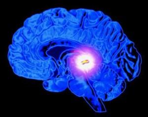 Melatonin As Dietary Supplement To Harmonize Natural Sleep Cycle