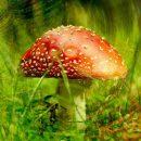 Hypnagogic Hallucinations Causes | Hallucinogenic Drugs