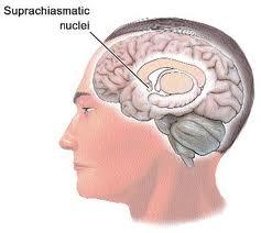 Circadian Rhythm Sleep Disorder You May Be At A Risk Of A Heart Disease superchiasmatic