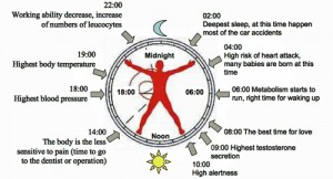 How Environmental Cues Affect Your Circadian Clock