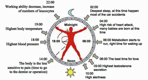 the effects of circadian rhythm in our daily routines And consideration for shipboard watch rotation requirements and daily routines that maximize  of our circadian rhythm is  can have drastic effects.