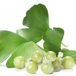 Gingko Biloba as a Natural Remedy for Narcolepsy