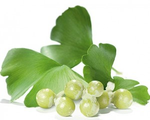 Gingko-Biloba-as-a-Natural-Remedy-for-Narcolepsy-Gingko-Biloba.jpg