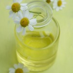 What Is the Maximum Number of Drops of Chamomile Essential Oil a Person Should Use?