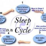 5 Stages of the Natural Sleep Cycle
