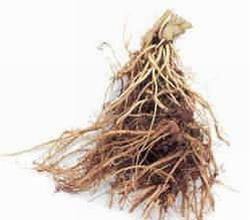 Herbal Remedies for Sleep Apnea.jpg