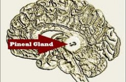 Pineal Gland Disorders efherne