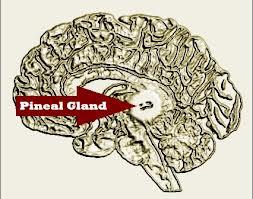 Pineal Gland Disorders - Sleep Disorders Advice & Help